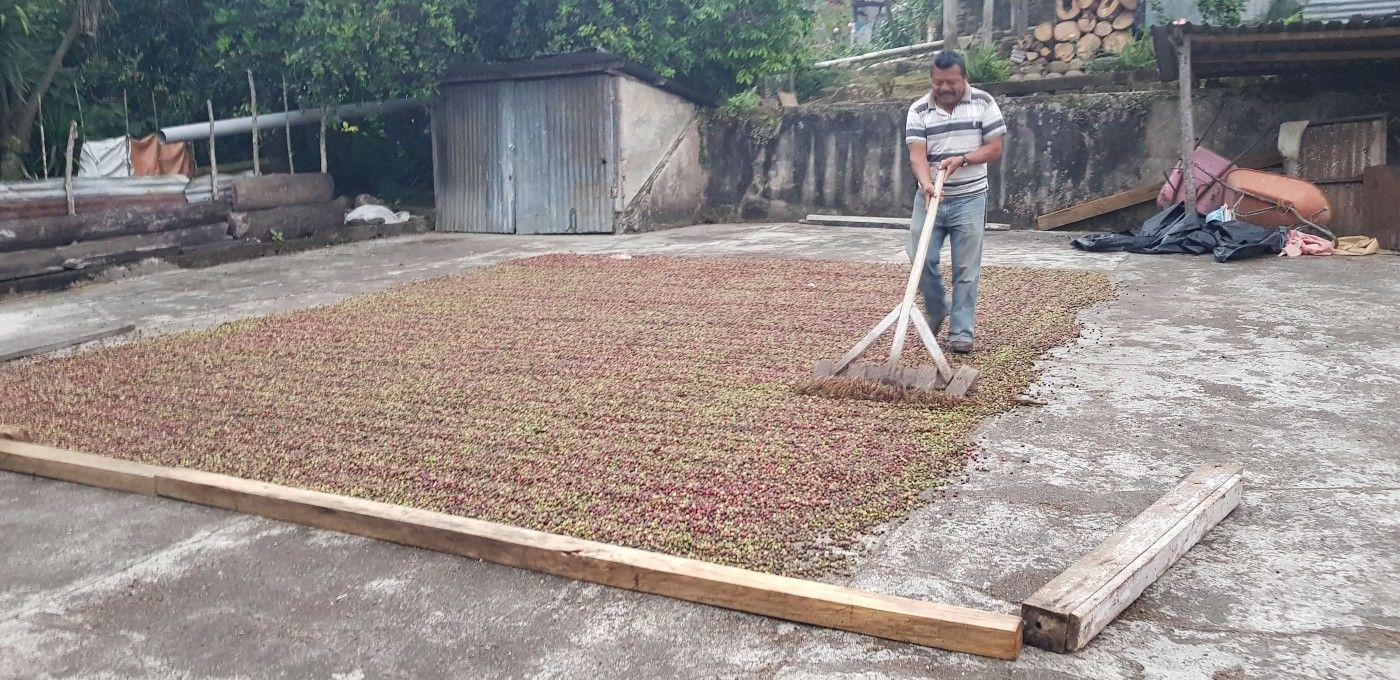 EthicHub comercializará el café de sus agricultores,