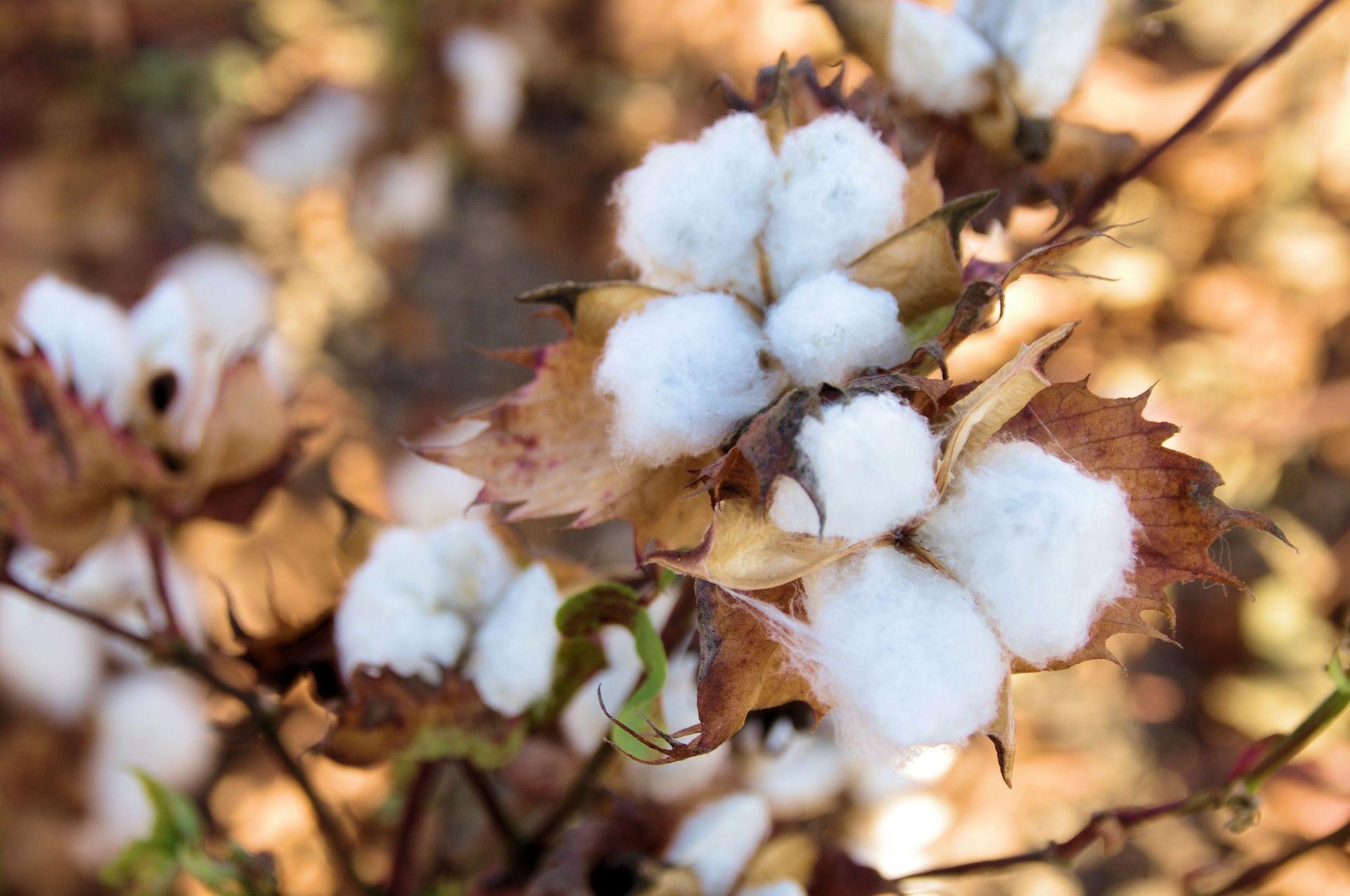 Foto de Los mayoristas textiles deben apostar por la calidad y la