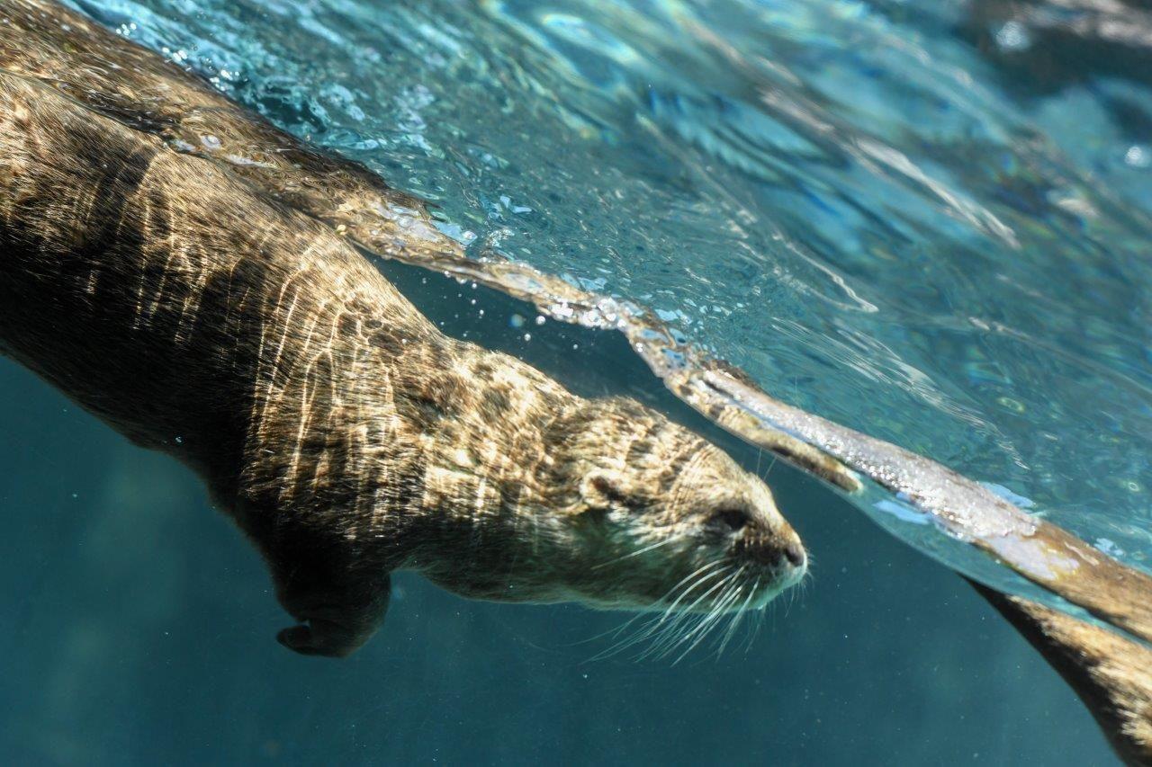Fotografia Los animales de Loro Parque dan la bienvenida al verano