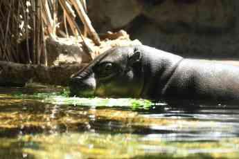 Foto de Los animales de Loro Parque dan la bienvenida al verano