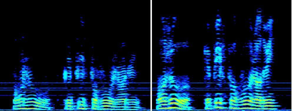 Foto de Las frecuencias altas se atenúan o desaparecen, lo que