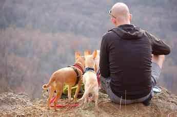 Foto de Viajar con mascotas