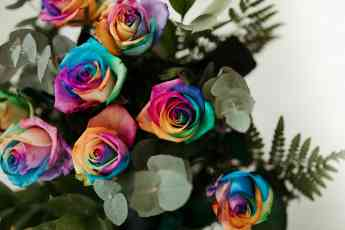 Flores Multicolor NATURKENVA
