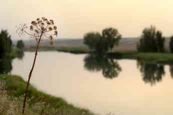 Foto de Río Tajo, a su paso por Albalate de Zorita