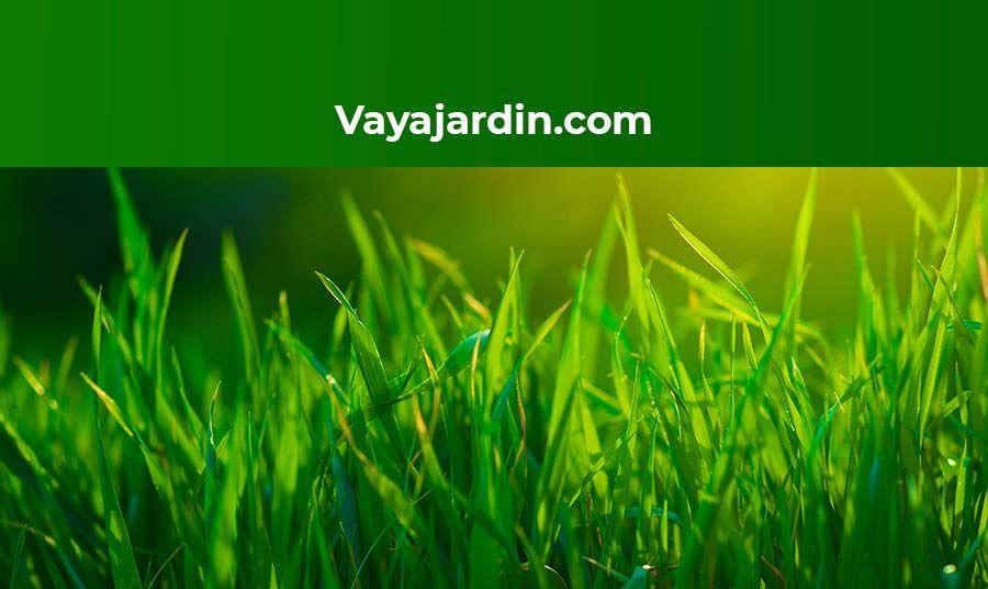Foto de Vayajardin.com