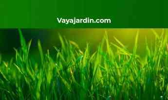 Noticias Nacional | Vayajardin.com