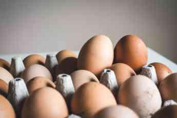 El huevo ecológico es uno de los productos estrella