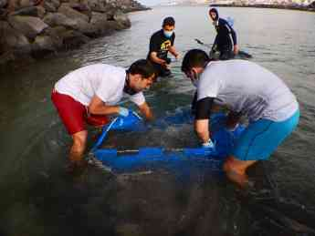 Foto de Investigadores realizan en Canarias el primer marcaje