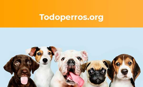 Foto de Todoperros.org