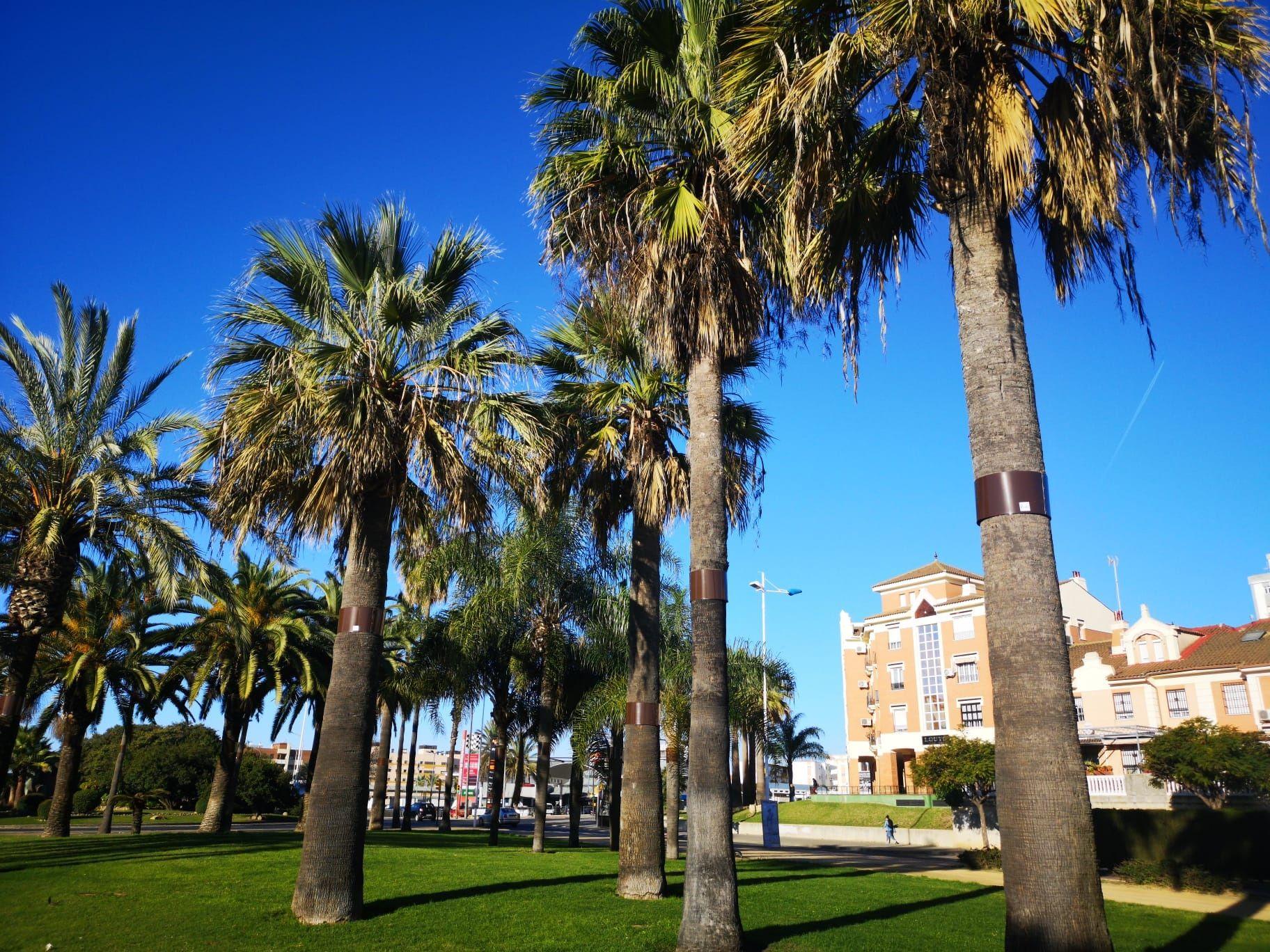 Palms Protection System se lanza al mercado de la franquicia de la mano de Tormo Franquicias Consulting