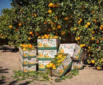 Naranjas Lola