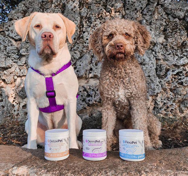 Fotografia Perros junto a algunos de los productos de Petia