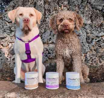Foto de Perros junto a algunos de los productos de Petia