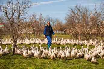 Foto de Patos al aire libre