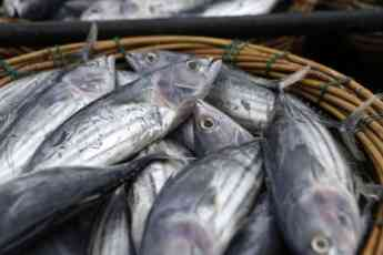 Tienda de Pesca