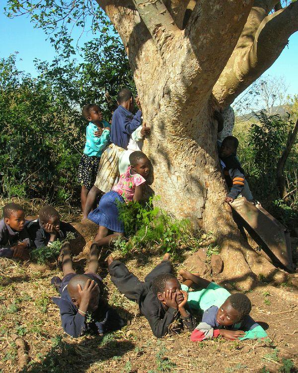 Foto de Niños se abrazan a un árbol de Treedom en Kenya