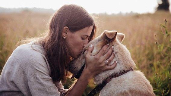 Expertos en terapia animal afirman que se puede querer a un perro más que a una persona
