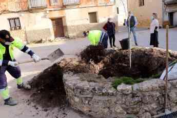 Foto de El Ayuntamiento de Pareja planta un nuevo olmo, resistente a