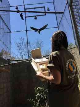 Foto de La adaptación de las aves pasa por un gran aviario de
