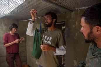 Foto de Los guacamayos son pesados y evaluados antes de su