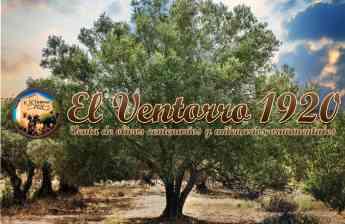 El olivo, el árbol decorativo de moda, por OLIVOS EL VENTORRO 1920