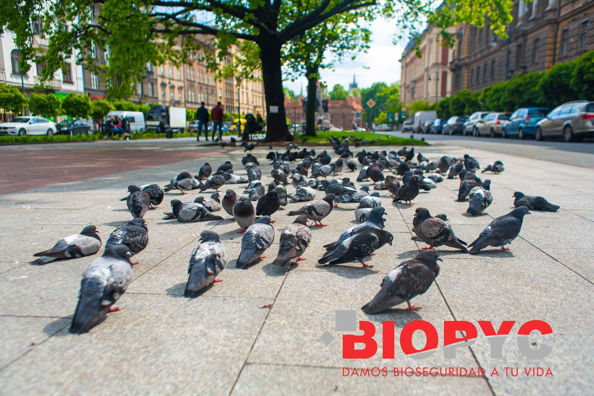 Biopyc lleva a cabo un control de aves en Fraga