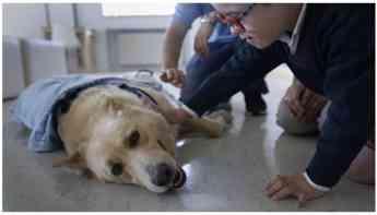 Foto de Perros de asistencia a pediatría
