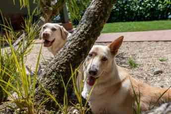 Foto de Perros de asistencia