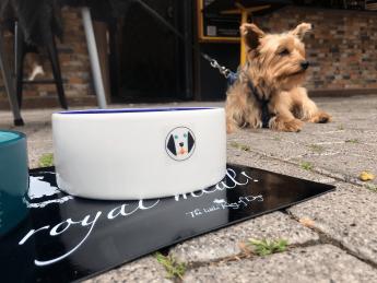 Perro disfrutando en la terraza de un bar de unos snacks caninos DoggieSnax