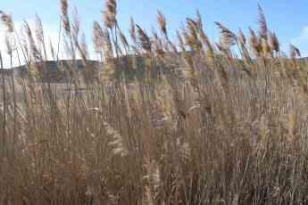 La Laguna de Madrigal en Paredes de Sigüenza, lugar estratégico para las aves acuáticas en la Sierra Norte de Guadalajara