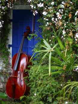 Foto de Cello