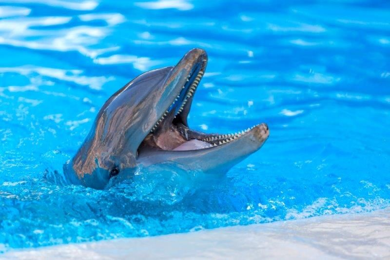 Fotografia Delfín en Loro Parque