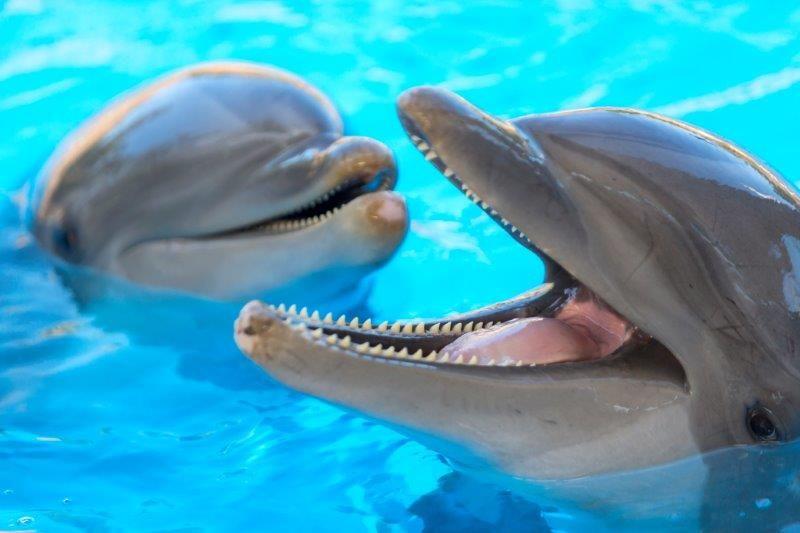 Fotografia Delfines en Loro Parque