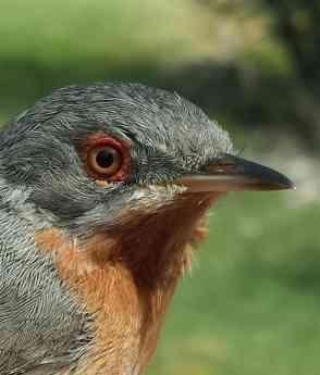 Foto de Estación de anillamiento científico de aves 'Hortensis' en