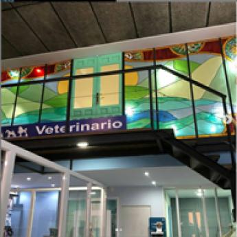 Malagueta VET&CO Interior