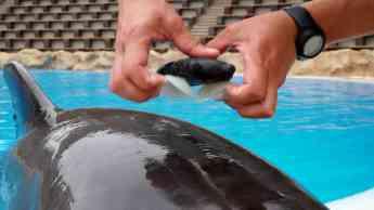Loro Parque participa en el estudio sobre bienestar de cetáceos más grande de la historia