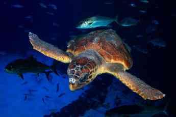Noticias Salud | Una tortuga encontrada en estado crítico se