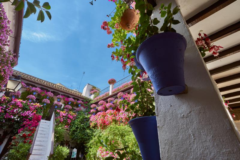 Fotografia Patios de Córdoba