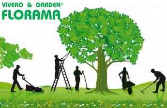 Noticias Actualidad | Comienza la temporada de la poda de árboles