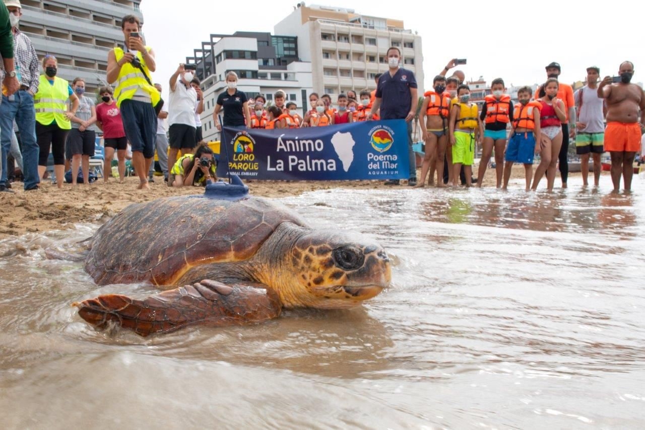Fotografia Poema del Mar devuelve al océano a una tortuga encontrada