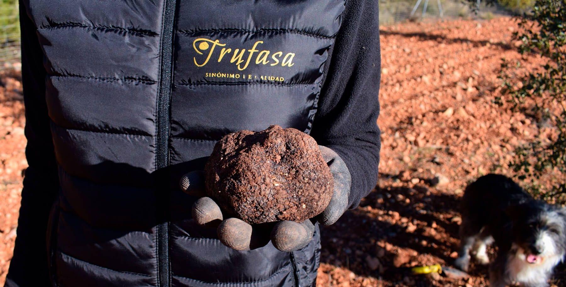 La trufa negra de cultivo sostenible de Trufasa, la gran protagonista de la temporada de la trufa